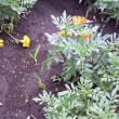 花壇の草取り作業!