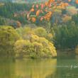 蛇ヶ池の秋