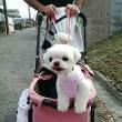 🎵 田中さんチの、 ハナちゃん&愛ちゃんは、 専用車に乗って