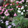 我が家のベランダの花