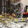 枝選びをする猫