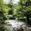 お盆前に釣り(増水の沢は厳しい)(2017/8/10)