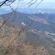 2018年1月・・・久しぶりの奥武蔵グリーンライン・・・林道で餌をついばむ・・・ウソ