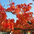「秋色の町」