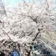 桜 【JR川崎駅南】2019.4.3