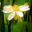 2017 ハスの花とバッタ  《遠賀郡遠賀町島津》