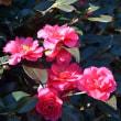 新宿御苑の春