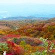 鳥海山竜が原湿原の紅葉、