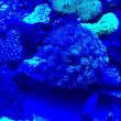 名古屋港水族館♪サンゴ&小魚さん♪( ´▽`)