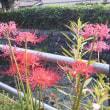 大丸用水の秋