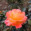 【京都園芸倶楽部Facebook】先週の植物(2018年12月9日〜15日)