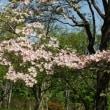 またキンランなど~武蔵丘陵森林公園~