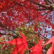秋ですね。