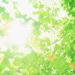 クラウンチャクラの光を取り戻し、本来のタイムラインに繋がる☆ ~ヘッド&フェイス エナジャイズヒーリング~
