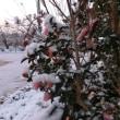 雪、氷点下5度の朝