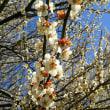 ♪‥春の香りに包まれて癒やされて。