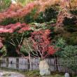 京の紅葉2017 南禅寺 色とりどりの紅葉