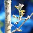 ブドウの木は生きている!ハナは、また見上げられるか?