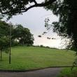 八月十七日と十八日の公園