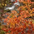 紅葉を求めて 木島平