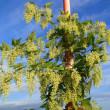 カラハナソウと赤い実の生る木
