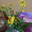 道沿いの菜の花を手折る