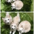 ミックス犬のメルちゃん 三種のポーズで