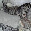 真夏日の野良猫