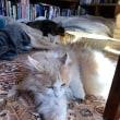 今日もなんか焼いたり、猫写真とかルリカさんに聞くとか。