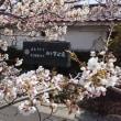 会津民俗館の桜も見頃を迎えました(^o^)/