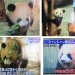 「パンダ」 明日から公開