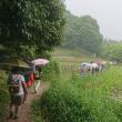 楽歩会「山の辺の道を歩く(柳本~桜井)」