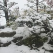 北国の新雪と紅葉・・