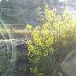 花を愛でながらポリと病