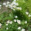ハイジャック植物