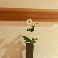9月21日その3 楠田商店さんで曙草と秋明菊