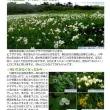【自然情報紙】「八幡平NOW7月2号」を発行しました。