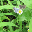 ミンミンゼミ・蝶々