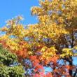 船岡山の紅葉