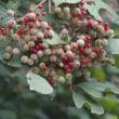 四季の森公園の秋の植物たち