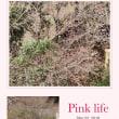ベランダから桜が咲いているのが分かります。日1日とピンクの花が色づいてきます。楽しみです。