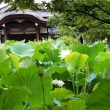 【京都】法金剛院の蓮(2018年8月8日撮影)
