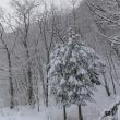 2018/03/22(木):突然の雪景色