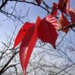 木の葉が次第に少なくなった