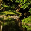 緑が眩しい小石川後楽園