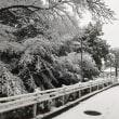横浜に大雪警報!