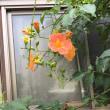 夏に見かけた花