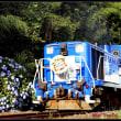 紫陽花と青いトロッコ列車奥出雲おろち号を撮る。