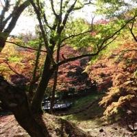 用作公園の紅葉2018