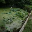 大賀池の夏終わる